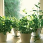 AROMATIZAR - La cocina de los aromas